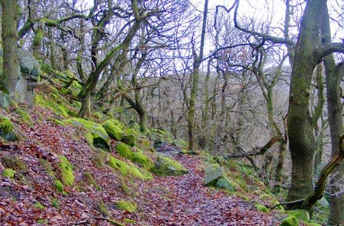 Ancient Peak District Woodland