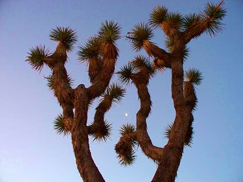 Joshua Tree meets The Moon