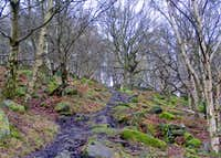 Woodland on Gardom's Edge