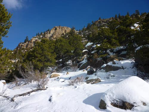 Piñon Forest and Snow