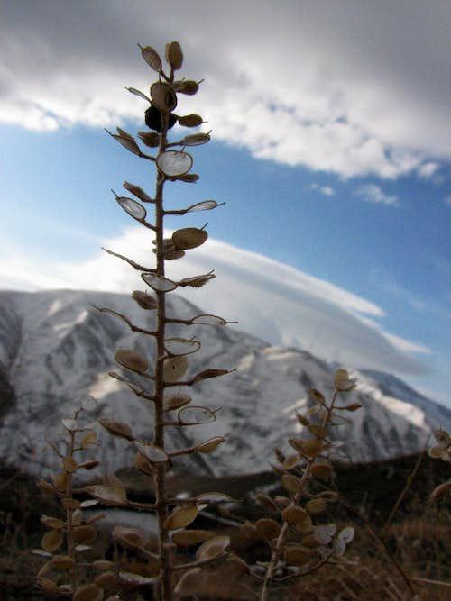 گیاهی زیبا در ارتفاعات زشک نزدیک قله زشک