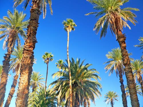 Palm grove at Furnace Creek