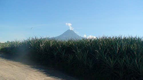 Mount Matutum Behind the Pineapples