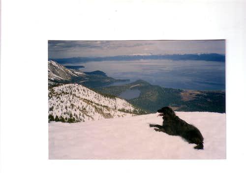 Shasta  on  Mt.Tallac