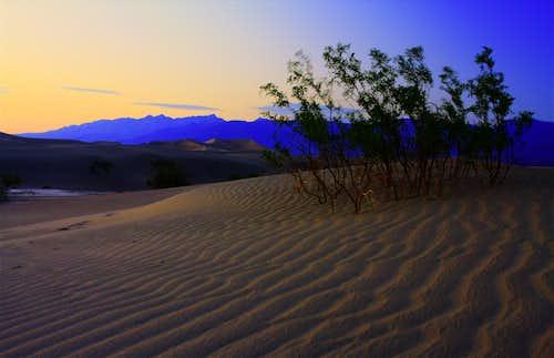 More Mesquite Flat Dunes