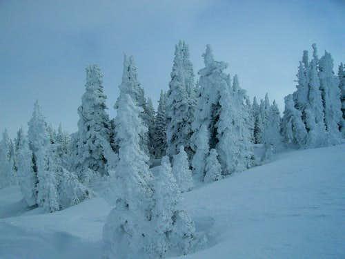 Snow Caked Trees