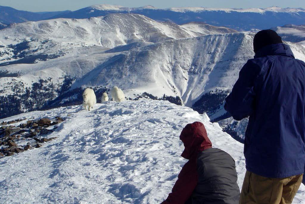 Quandary Peak pic 18