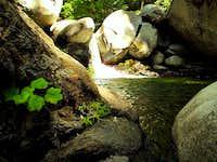 Water scene in Trinity Alps