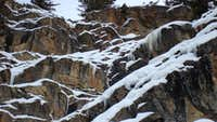 Ice climbing chamois