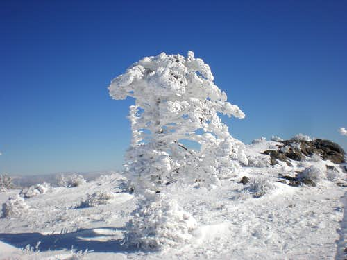 Interesting Rime Ice...