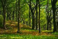 Limekilns Forest