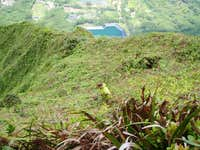 Looking for rare plants just on the windward side of the sheer Ko olau Ridgeline