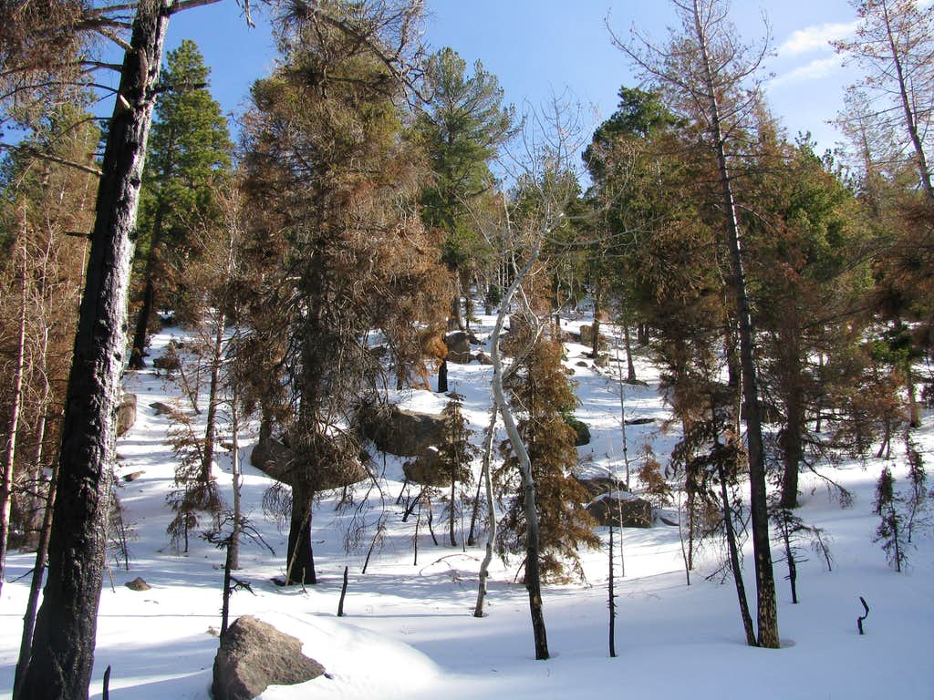 Winter along the Forsyth trail