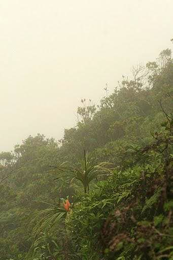 Ko\'olau Cloud Forest