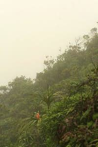 Ko'olau Cloud Forest