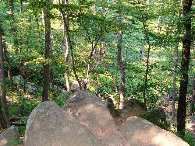 View from the trail into the...