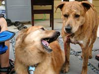 Roxy and Blondie