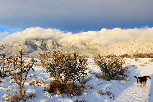 cacti and snow...