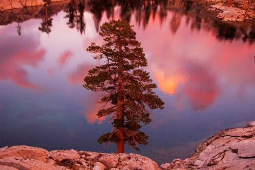 Pine Tree and Reflection