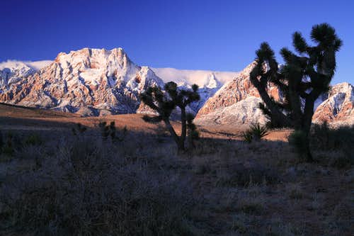 Joshua Trees and Red Rock Range