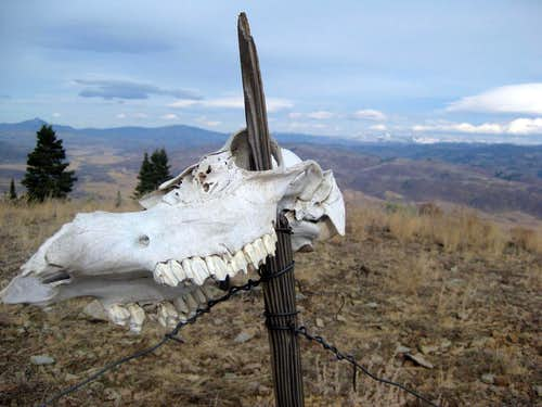 Elk skull on summit of Elk Mountain (Sleeping Giant)