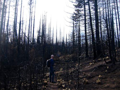 TJ Trail Burn
