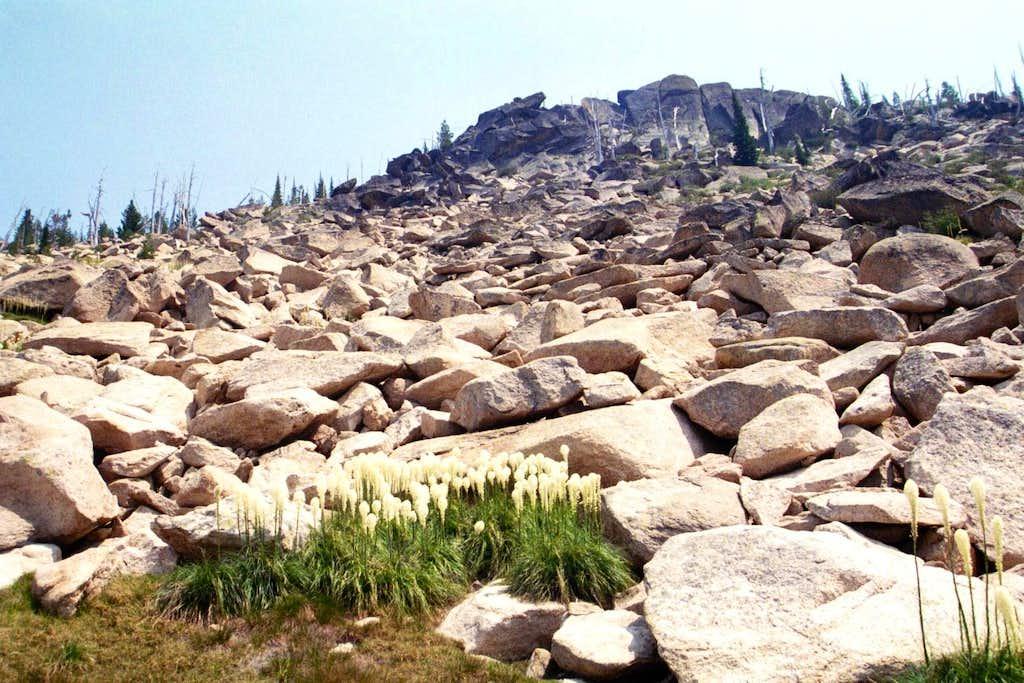 Beargrass on the North Ridge