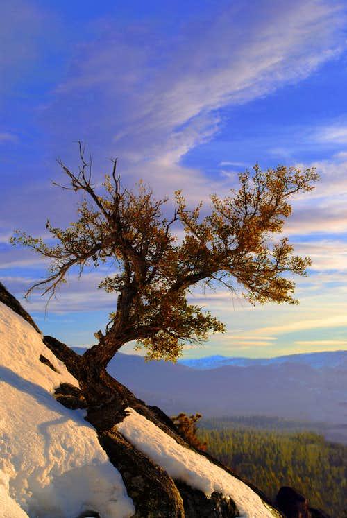 Tree In Lake Tahoe