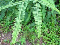 Unusual Ferns