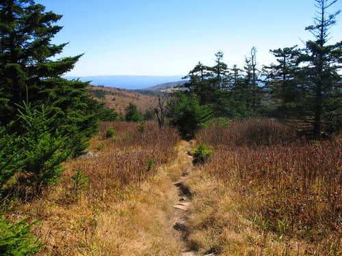 Spruce Fir Forest