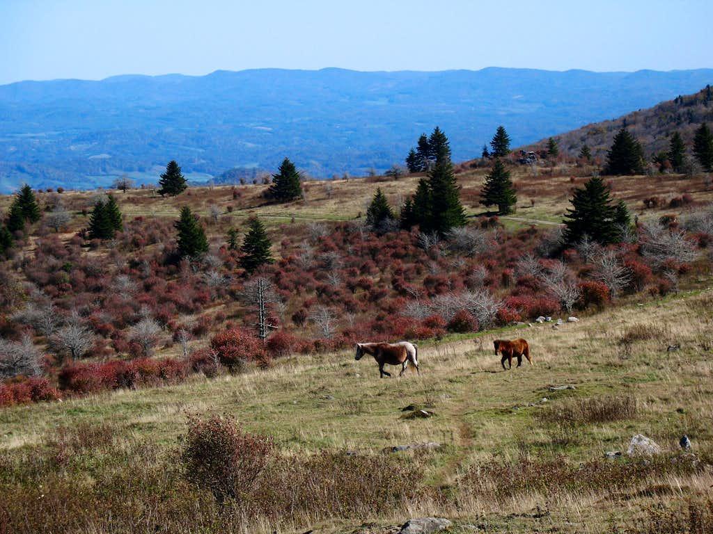 Rangeland