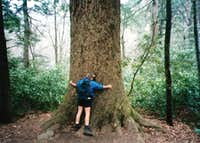 Smoky Mountain Tree Hugger 1996