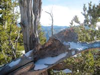 Carved snag on summit