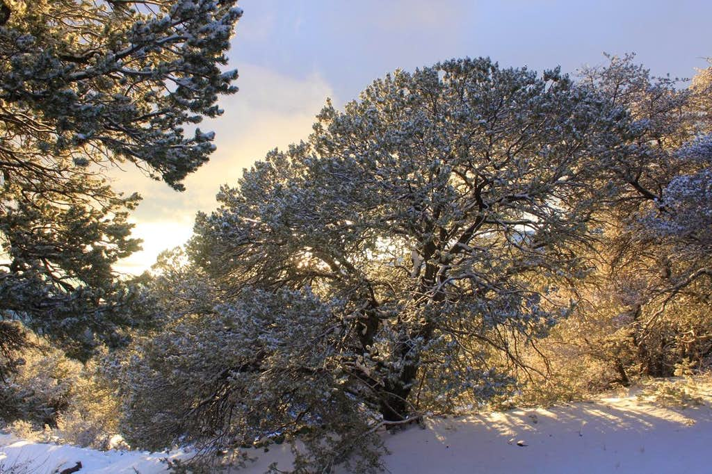 sunlit trees...