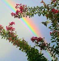rainbow ruby-throat
