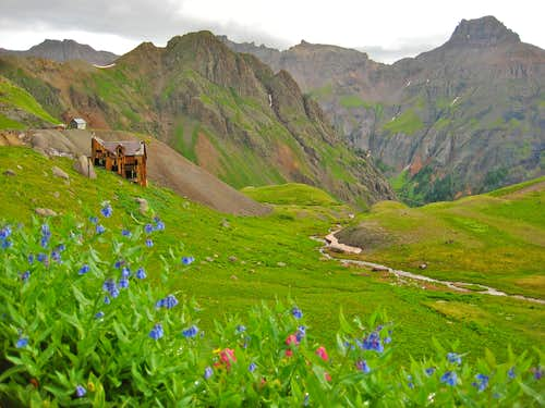 Yankee Boy Basin: Run down mine and flowers
