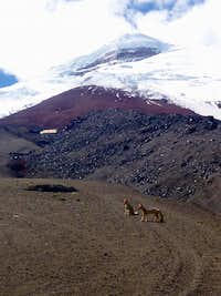 Foxes, the refugio and Cotopaxi