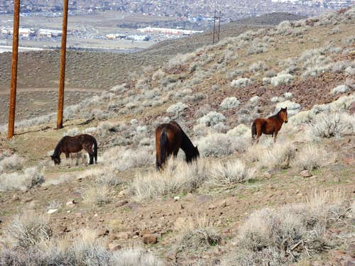 Wild horses on the lower slope