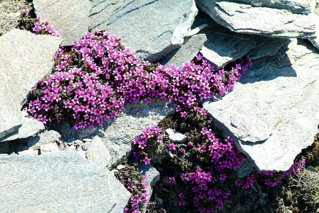 Aouillette Point  Wonderful  Nature