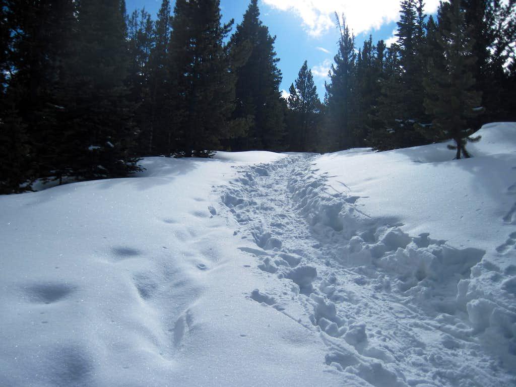towards the snowy - photo #24