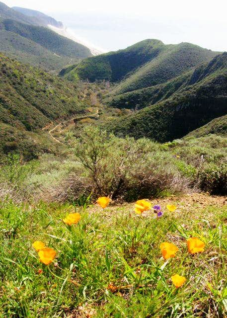 Mugu Peak Trail View w/ Poppies
