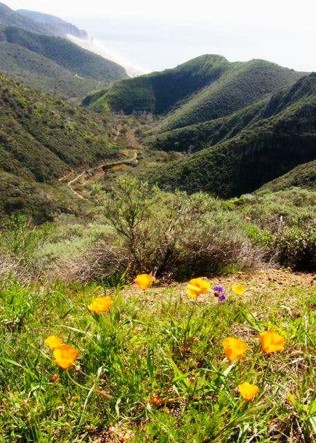 Mugu Peak Trail View w/ Poppies
