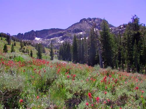 Wildflowers abound on the...
