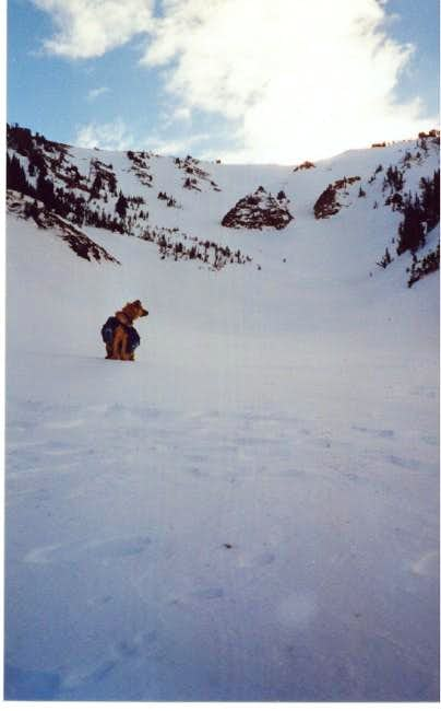 Assessing the avalanche...
