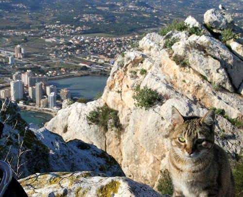 Crag Kitty!  Costa Blanca