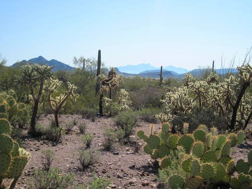 Sonoran Desert near Cat Mountain