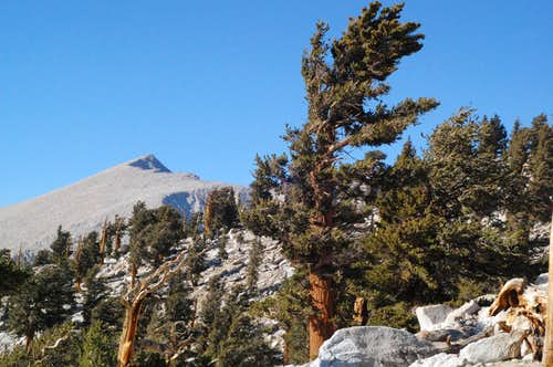 Joe Devel Peak among Fox Pines