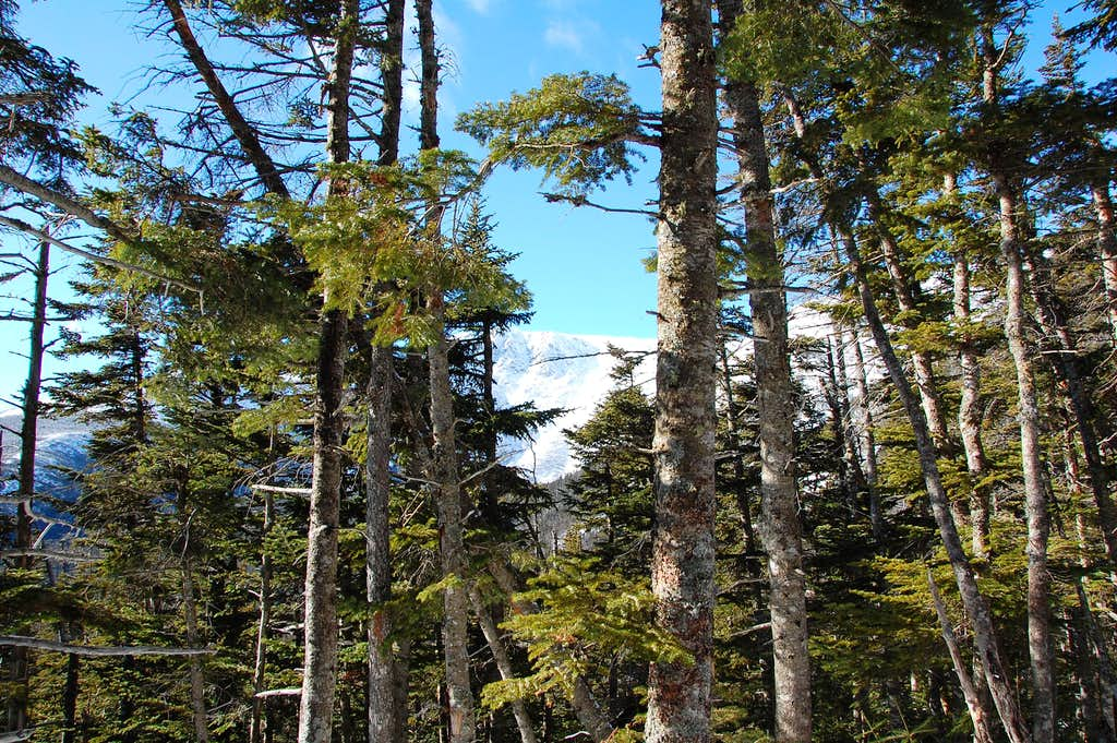 Peaking Through The Trees