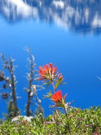 Indian Paintbrush on slopes...