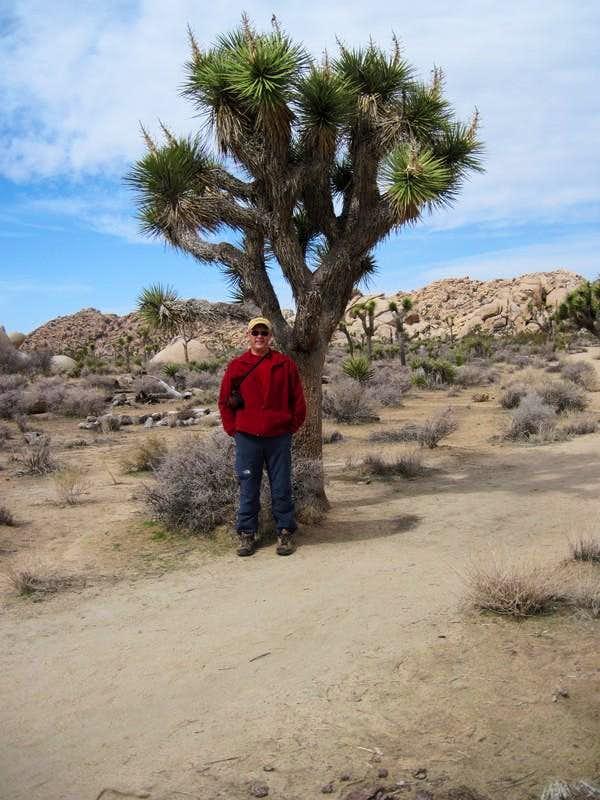 Joshua Tree and Me